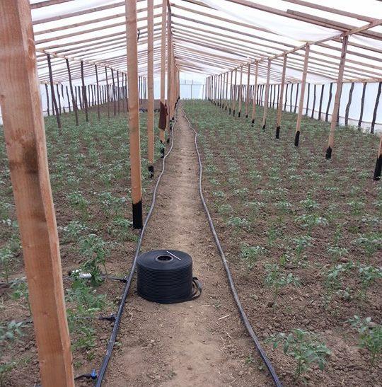 irrigatie solar 1